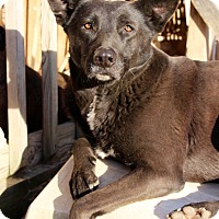 Adopt A Pet :: Shadow - Mississauga, ON