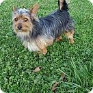Adopt A Pet :: Billy Madison