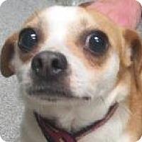 Adopt A Pet :: Cena - Lincolnton, NC