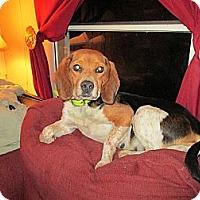 Adopt A Pet :: Glass - Sardis, TN
