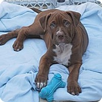 Adopt A Pet :: Harley - Minneola, FL