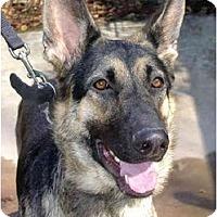 Adopt A Pet :: Sheba - Pike Road, AL