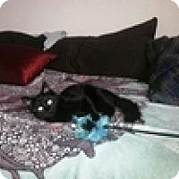 Adopt A Pet :: Sacha - Vancouver, BC