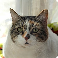 Adopt A Pet :: Camilla - Chicago, IL