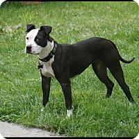 Adopt A Pet :: Gale - Salem, OR