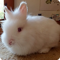 Adopt A Pet :: Truffle - Foster, RI