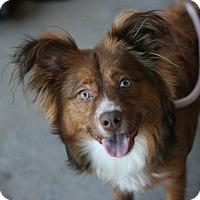 Adopt A Pet :: Oso - Canoga Park, CA