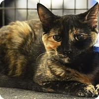 Adopt A Pet :: Tori - Rockford, IL