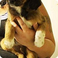 Adopt A Pet :: Bailey - Charlestown, RI