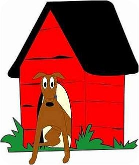 Greyhound Dog for adoption in Gerrardstown, West Virginia - View dog updates v.a. link