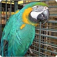 Adopt A Pet :: Cosmos - Edgerton, WI