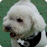 Adopt A Pet :: Quincy - La Costa, CA