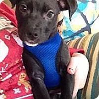 Adopt A Pet :: Whimsy - Nashville, TN