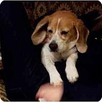Adopt A Pet :: Alexa - Phoenix, AZ