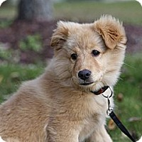 Adopt A Pet :: Sandie - Rigaud, QC