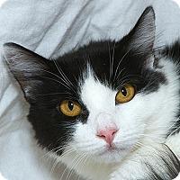 Adopt A Pet :: Lily N - Sacramento, CA
