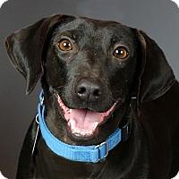 Adopt A Pet :: Katie - Columbia, IL