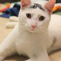 Adopt A Pet :: Jack - Carlisle, PA