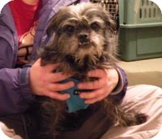 Pug/Poodle (Miniature) Mix Dog for adoption in Medford, Massachusetts - Rufus