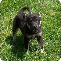 Adopt A Pet :: Vinnie - Belleville, MI