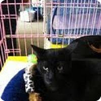 Adopt A Pet :: Zack - Bedford, MA