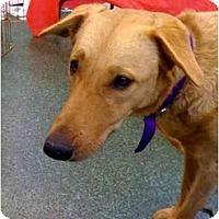 Adopt A Pet :: Molly - Fowler, CA