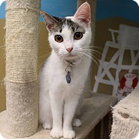 Adopt A Pet :: Bellatrix - Byron Center, MI