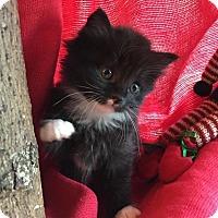 Adopt A Pet :: Noelle - Union, KY