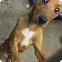 Adopt A Pet :: Buck in CT - Manchester, CT