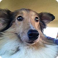 Adopt A Pet :: Ava: LOVES CHEESE TREATS! - Spring City, TN