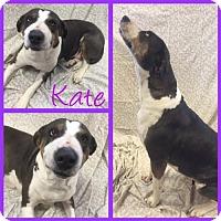 Adopt A Pet :: Kate - Alvarado, TX