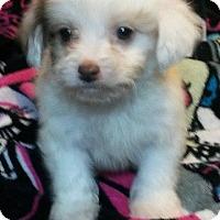 Adopt A Pet :: Nugget - East Hartford, CT