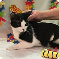 Adopt A Pet :: Bella - Butner, NC