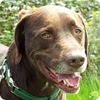 Adopt A Pet :: Shoji - Grants Pass, OR