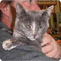 Adopt A Pet :: Chewy - Warren, MI