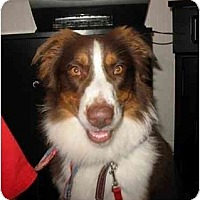 Adopt A Pet :: Alladin - Orlando, FL