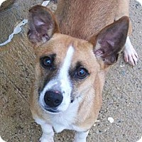 Adopt A Pet :: Ottis - Staley, NC