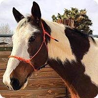 Adopt A Pet :: Riff Raff - Lancaster, CA