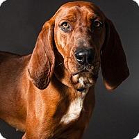 Adopt A Pet :: Stone - Armonk, NY