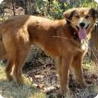 Adopt A Pet :: Jasmine - Irmo, SC