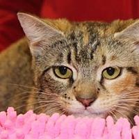 Adopt A Pet :: Liza - Louisville, KY