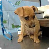 Adopt A Pet :: URGENT on 4/29 SAN BERNARDINO - San Bernardino, CA