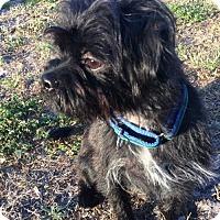 Adopt A Pet :: Aspen - Sarasota, FL