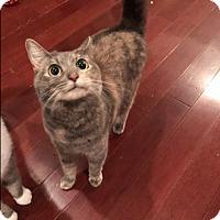 Adopt A Pet :: Manny Machado (COURTESY POST) - Baltimore, MD