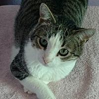 Adopt A Pet :: Simon - Alamogordo, NM