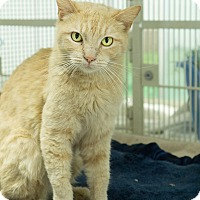 Adopt A Pet :: Marigold - Montclair, CA
