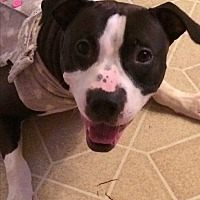 Adopt A Pet :: Mickie - Chicago, IL