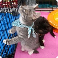 Adopt A Pet :: Joey - Sterling Hgts, MI