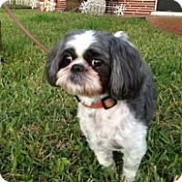 Adopt A Pet :: Charlie - Davie, FL