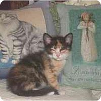 Adopt A Pet :: Electra - Summerville, SC